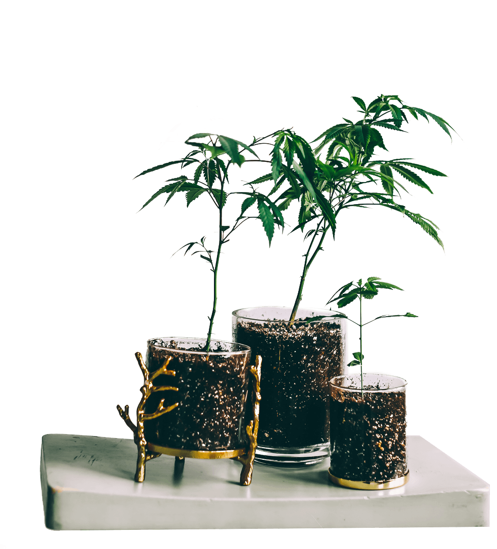 potted plants image