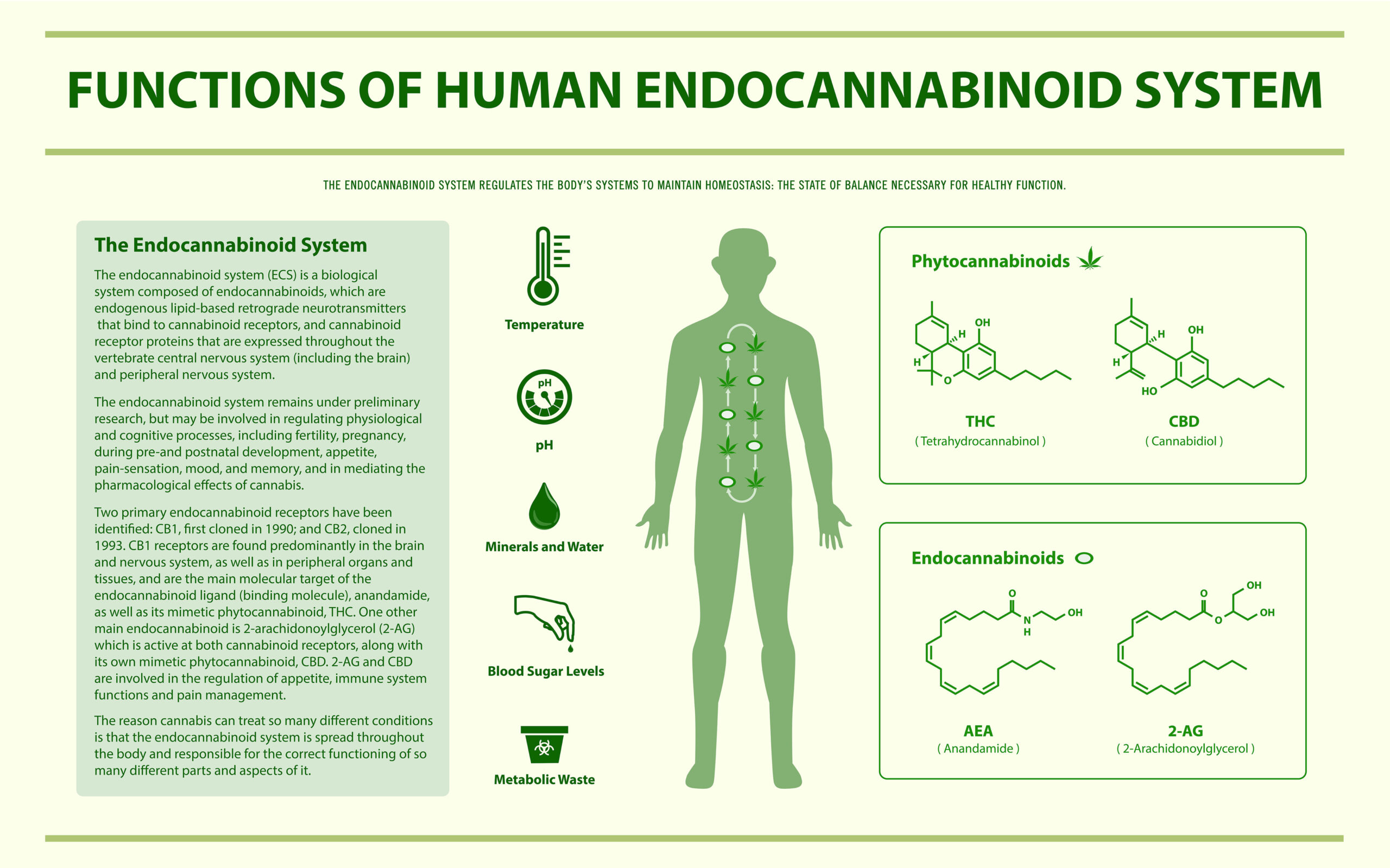Divine Elements Functions of Human Endocannabinoid System image